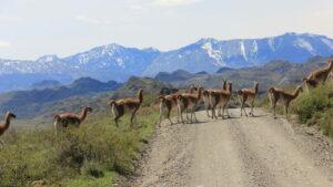 Park Patagonia