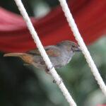 Vogels (2)