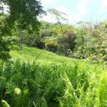 Weidse vlaktes